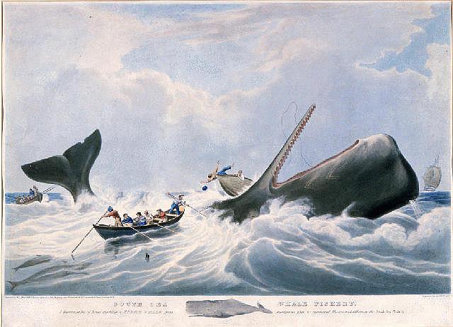 Whaling, Huggins