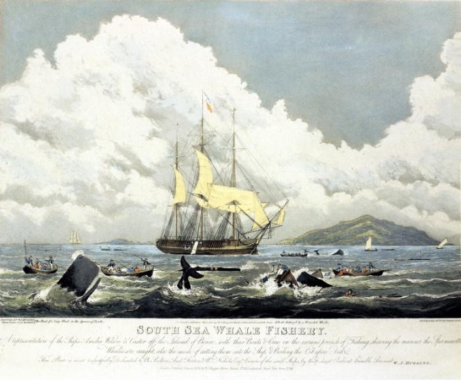 Whaling in Indonesia (Maluku island), Huggins