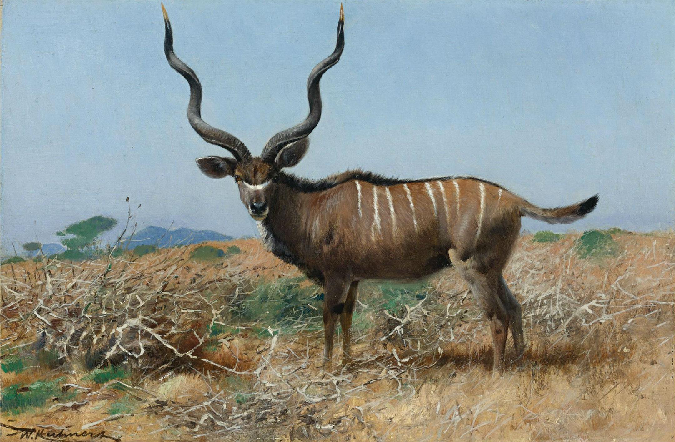 Antelope_kuhnert