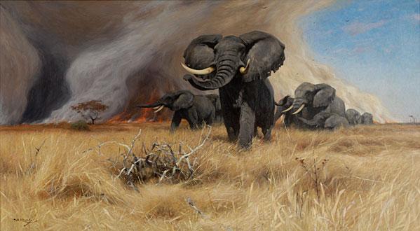 elephant_fire_kuhnert
