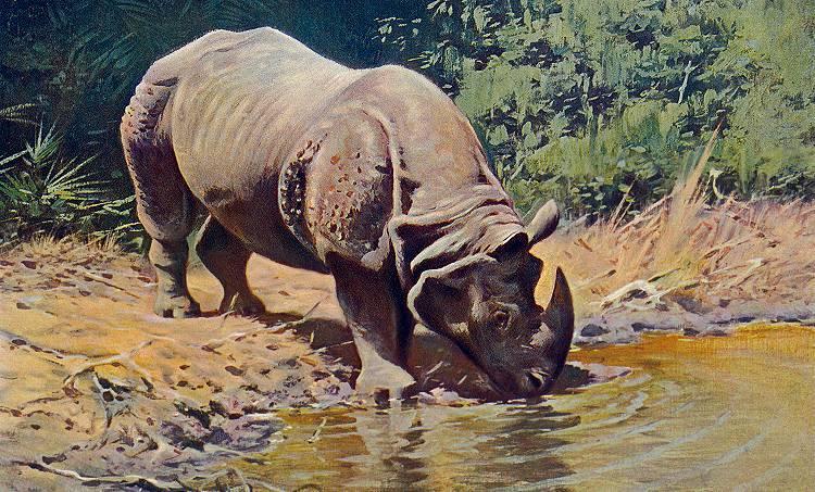friedrich-wilhelm-kuhnert-rhinoceros