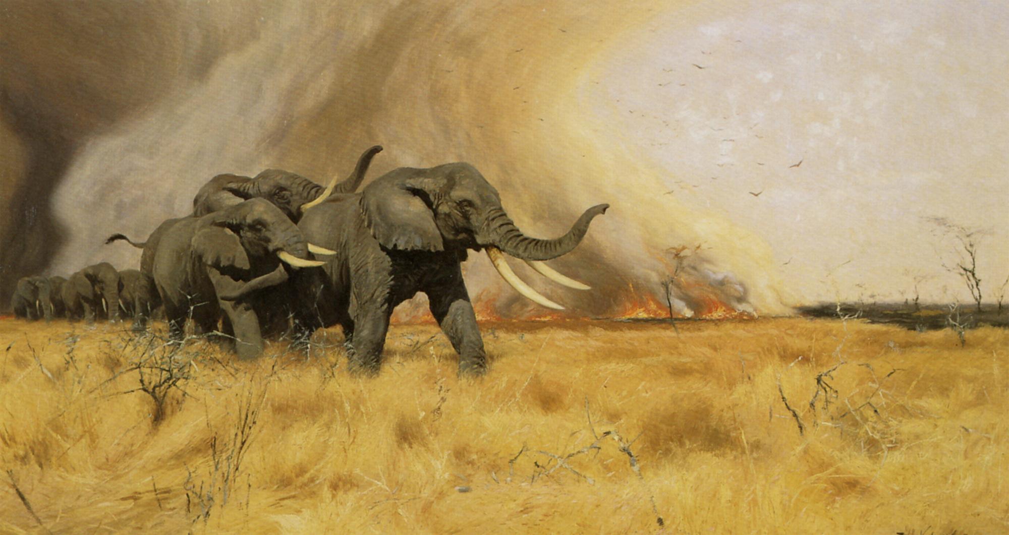 kuhnert_wilhelm_elephants_moving_before_a_veldt_fire_1912_oil_on_canvas-huge