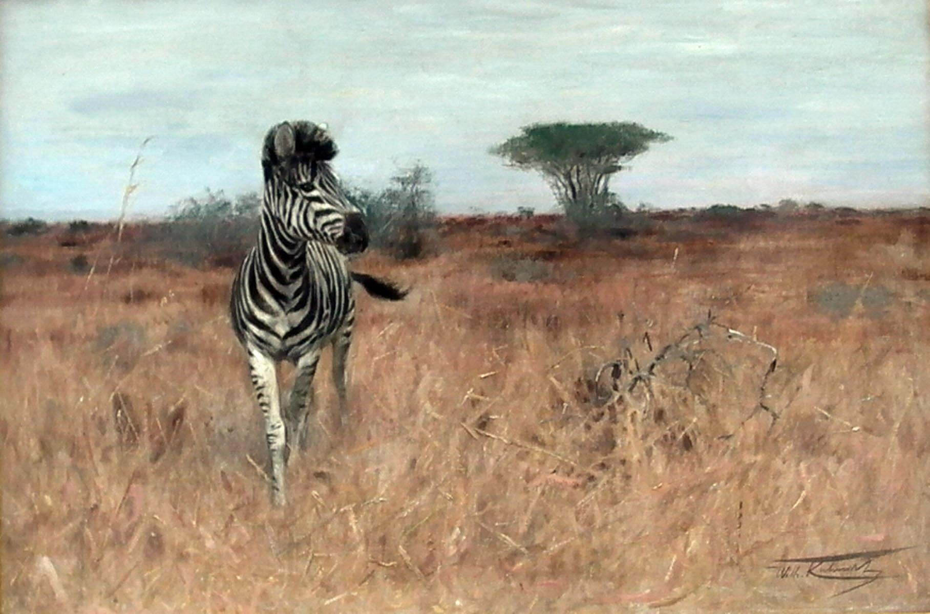kuhnert_zebra